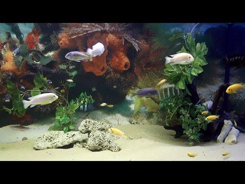 Oceanarium - Łeba