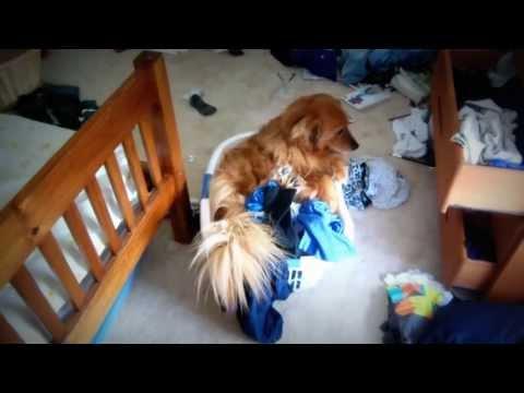 Dog escapes basket!!!