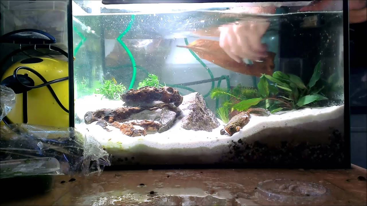 triops aquarium neu einrichten teil 3 mit commentary youtube. Black Bedroom Furniture Sets. Home Design Ideas
