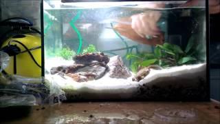 Triops Aquarium neu Einrichten Teil 3 (mit commentary)