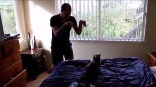 Самые смешные видео с котами 2016 HD Подборка 2