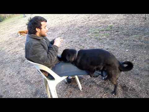 jojo likes it when dogs hump his leg