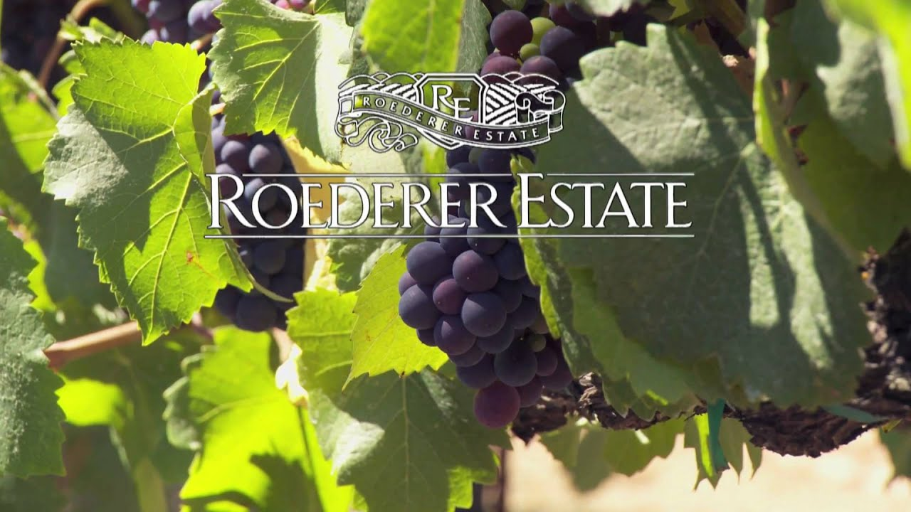 Harvest Time at Roederer Estate