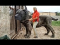 DOG BREED Best Strongest Dogs in The World [Mr Fahey]