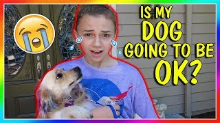 IS MY DOG GOING TO BE OKAY? | We Are The Davises