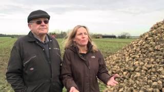 Red Tractor - Sugar Beet
