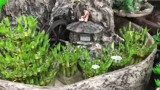 개운죽/수경식물/수경재배식물/어항/드라세나종류/개운죽 …
