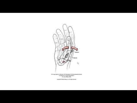 Wrist and Hand Anatomy