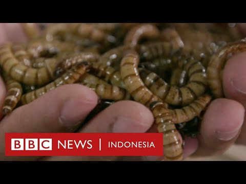 CLICK - Minyak Ulat, Robot Mini, Dan Aplikasi Pemantau Kucing - BBC News Indonesia