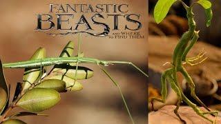 Real Life Fantastic Beasts!! (POSSIBLE SPOILERS)