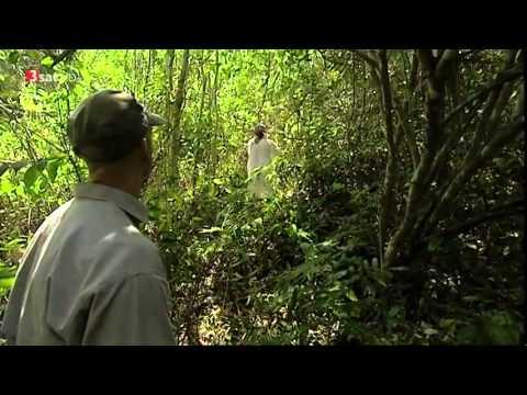 Yucatán  Im Land der Maya HD DOKU480p H 264 AAC