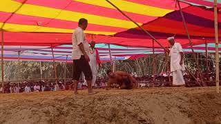 New Short Kusti Dangal // Deva Thapa Kusti Dangal Videos// 2021 // Kusti Ka Dhamal