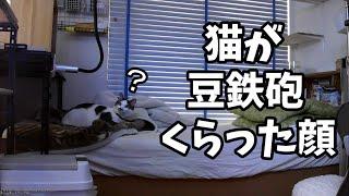 留守の飼主の声が突然聞こえたら猫はどうするのか?