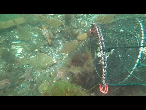 통발을 던져 놓았더니 ...바다 물속 상황이 이