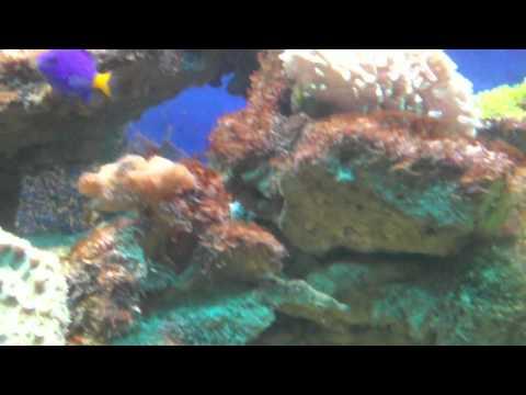 Заставка Морской аквариум 2 для рабочего стола, скачать