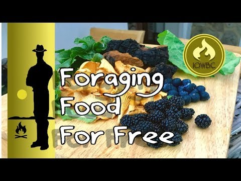 Foraging nutritional food for free