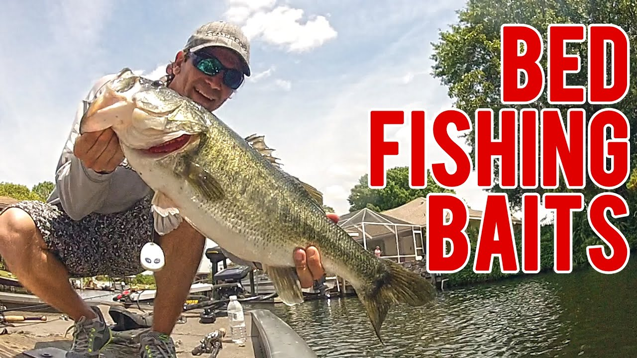 bass bed fishing baits for spring - youtube, Hard Baits