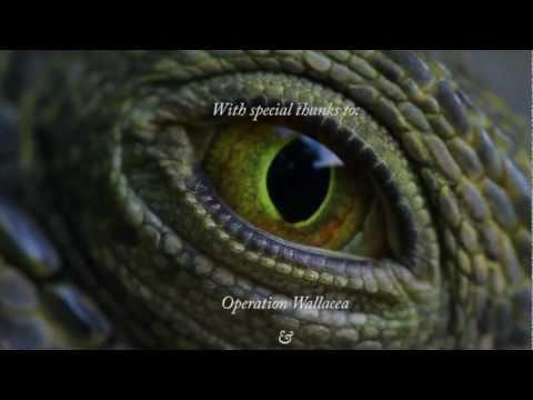 Survival on the Brink - Wildlife Documentary on the Cayos Cochinos, Honduras.