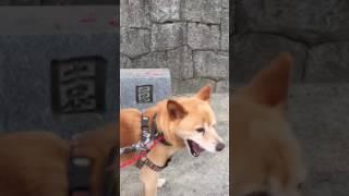 【箕面市芦原公園】ゴン太ちゃんのワンちゃんシッター thumbnail