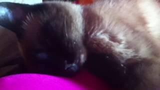 Старенькая кошка по имени Кошка