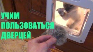Врезная дверца для кошек. Lockable 4-Way Locking Cat Door