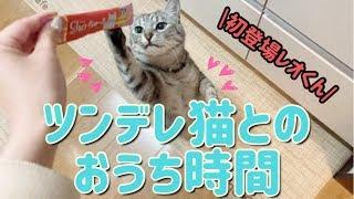まりまーり #アイドル諜報機関LEVEL7 #猫 #猫のいる生活 初登場レオくんです。 そんなに好かれてないので わたしとの2ショットがほぼない。悲し...