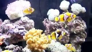Ragam Komoditas Ikan Hias