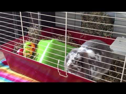 Mika speelt in de kooi