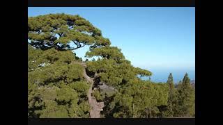 Mirador de la Caldera de Los Pinos de Gáldar Gran Canaria