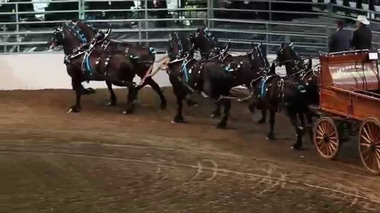 World Champion Six Horse Hitch Competition Winner
