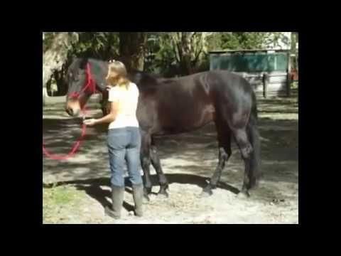 The Fluid Horse   Equine Massage
