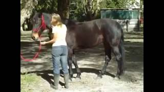 vuclip The Fluid Horse   Equine Massage