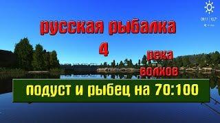 Русская рыбалка 4(рр4) - река Волхов.Подуст и Рыбец на 70:100