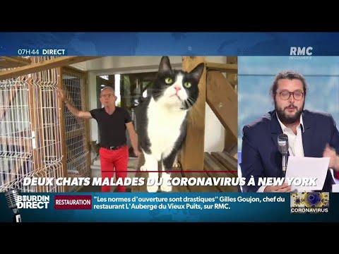 Deux chats testés positifs au coronavirus dans l'État de New York