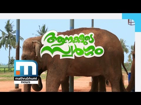 Elephants' Heaven: Special Programme| Mathrubhumi News