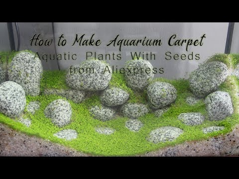 Make Aquarium Carpet - Aquatic Plants With Seeds From Aliexpress