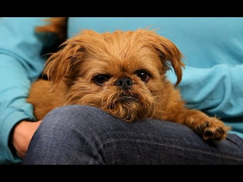 How To Stop Poop Eating | Dog Training