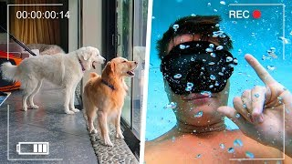 Gambar cover My Dog Thinks I'm Drowning (GoPro Spycam Footage)