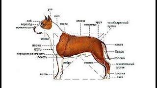 Аллергия у собаки Ветеринар  23 08 2014 год