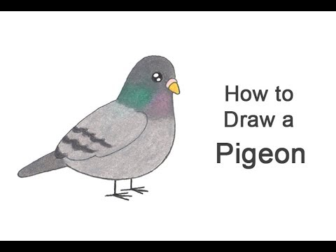 How To Draw A Pigeon (Cartoon)