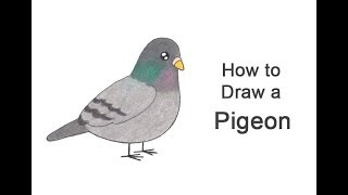Watch How To Draw Pigeons Lessons And Draw By Yourself