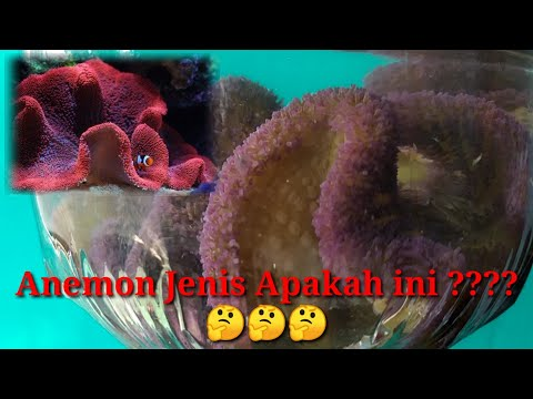 REVIEW PENJUAL IKAN HIAS DAN PERALATAN AQUARIUM & KOLAM -29 Juli 2020 from YouTube · Duration:  12 minutes 4 seconds