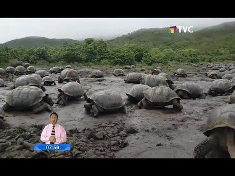 Tortugas gigantes cuentan