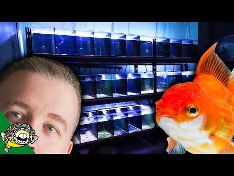 Aquarium Fish Store Tour at Aquarium Co-Op local fish store