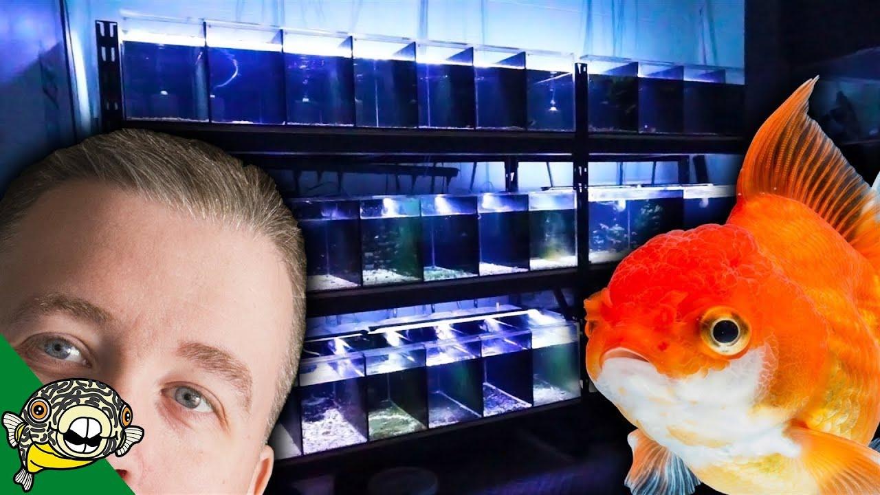Aquarium fish store tour at aquarium co op local fish for Local fish store