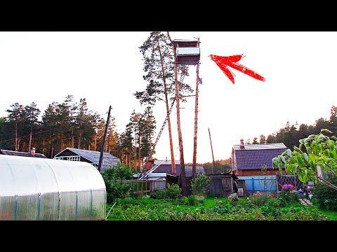 Видео: Наглый Сосед построил Дом на чужом Дереве высотой 18 метров! А потом случилось ЭТО