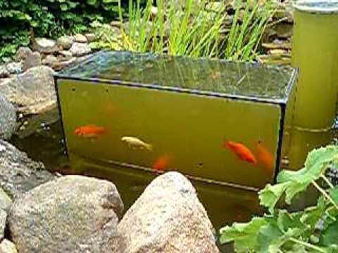 Aquarium andersrum im teich youtube for Teich winter fische