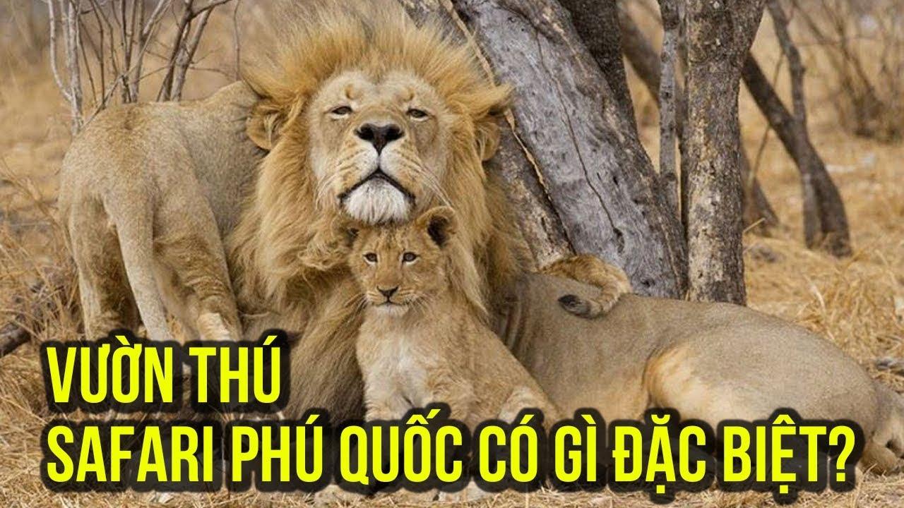 Safari In Va >> Du lịch Phú Quốc: trải nghiệm khám phá vườn thú Vinpearl Safari Phú Quốc có gì vui? - YouTube