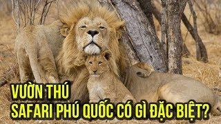 Du lịch Phú Quốc: trải nghiệm khám phá vườn thú Vinpearl Safari Phú Quốc có gì vui?