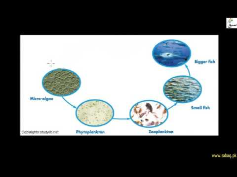 Limnetic and Profundal zone of lakes
